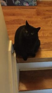 LOST CAT COWIE HILL