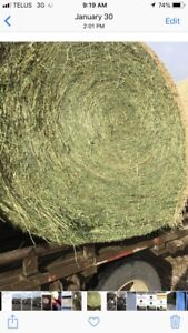 Second cut hay for sale in rounds (full loads of 34/38 only)
