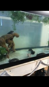 Tanks and axolotls for sale