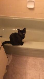 Looking for a kitten/young cat for my kitten!!