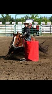 Barrel racing and riding lessons  Strathcona County Edmonton Area image 1