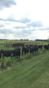 Wanted- Pasture or Grass land to Rent