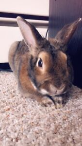 Year old male bunny