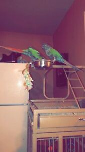 ISO free or cheap parrot stuff