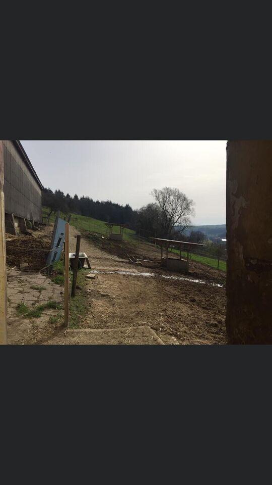 Offenstallplatz / Offenstall in Saarland - Merzig