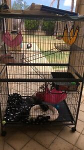 female ferret kit and cage Mindarie Wanneroo Area Preview