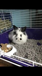 Bunny with cage