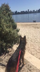 Candace dog walking Como South Perth Area Preview