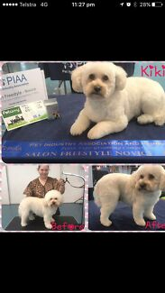 Tina's mobile and at home dog grooming and hydrobath service