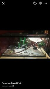 Extra Large Terrarium and Female Bearded Dragon