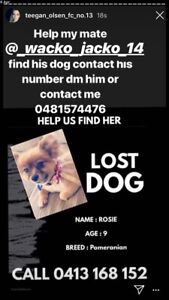 Wanted: Missing dog