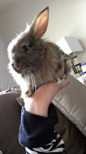 5 month old baby bunny for rehoming
