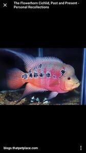 Looking for cichlids
