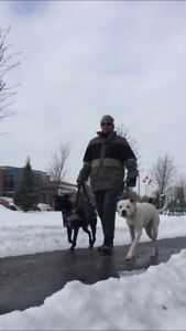 Dog Walker in Clarence-Rockland area.
