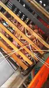 New Twin bait basket  3/4 Size Craypots Perth Perth City Area Preview