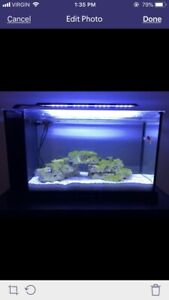 Fluval Spec V marine complete kit with live rock, sand and fish