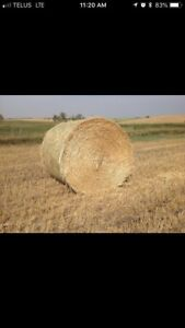 Wheat straw for sale in the swath