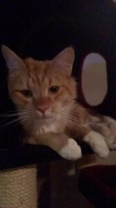 Lost cat Huntingdale Gosnells Area Preview