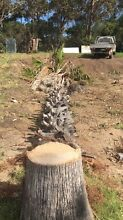 Block clearing tree removal or reductions free quotes Batemans Bay Eurobodalla Area Preview