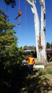 Sam's Fast Tree Lopping Service Blacktown Blacktown Area Preview