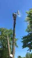 Hazardous Tree Removal and Tree Trimming