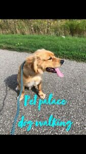 ❣️Private Dog Walking Services $15❣️