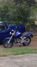 Honda 2008 CBF250 LAMS Approved Bike For Sale Samford Valley Brisbane North West Preview