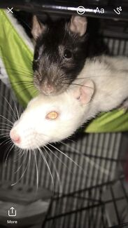 •Willow and Tasha are looking for a new home•