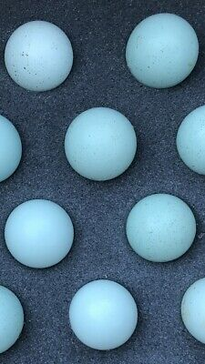 7 Celadon Blue Coturnix Quail Eggs Free Shipping