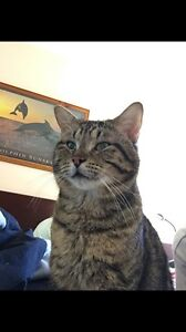 LOST CAT Edgewater Joondalup Area Preview