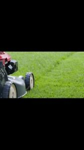 Lawn mowing/grass cutting