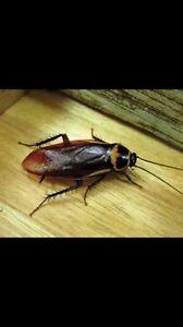 Pest Control - Winter Specials Newcastle Newcastle Area Preview