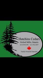 Cedar trees for hedges