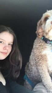 Dog walker and pet sitter in Dartmouth!