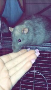 Rats, cage & much more!