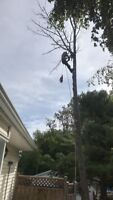 Tree & Limb Removal, Lot Clearing & Chipper Services Insured