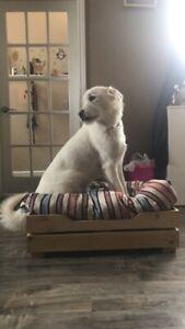 Lit pour chien moyen,  dog bed medium size