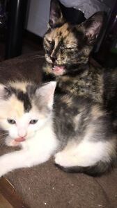 Free kitten and mother