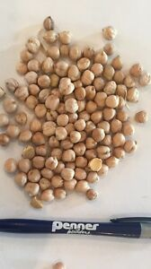 Large  chickpea seed for sale