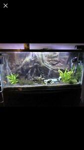80 Gallon Hagen Aquarium With Metal stand & 3D background !!