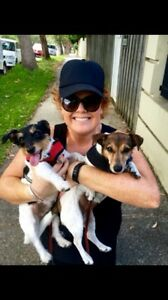 PROFESSIONAL DOG WALKER - LOWER NTH SHORE/ NTH BEACHES + PET SITTING Mosman Mosman Area Preview