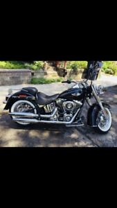 2012 Harley Davidson softail deluxe- in excellent condition