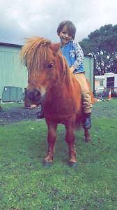 Mini stallion Cranbourne East Casey Area Preview
