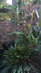 GARDENING BUSINESS FOR SALE Hornsby Hornsby Area Preview