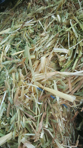 Oaten Hays /Lucerne Hays/ Guinea pigs n Rabbits Food Mix Shelley Canning Area Preview