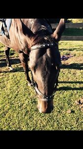 Black diamontee full size leather bridle Maroochydore Maroochydore Area Preview