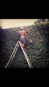 Hedge trimming specialist