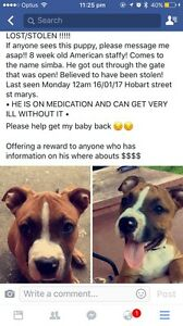 LOST/STOLEN!!!!! St Marys Penrith Area Preview