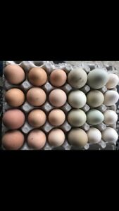 ❋ Two Dozen Rainbow Mix & Match Chicken Hatching Eggs ❋