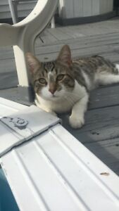 Reward - Lost Young Cat (Chat Perdu) Missing Since August 4 2018